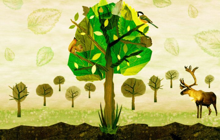 Bioremediation and Permaculture