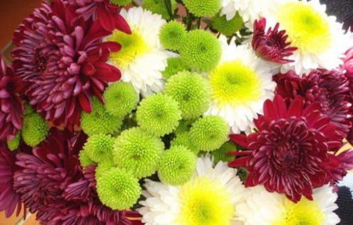 Perennials: Chrysanthemums 2