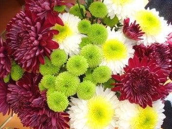 Perennials: Chrysanthemums 3