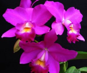 ORCHIDS - can I grow them in my home? 4
