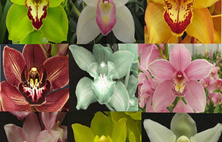 ORCHIDS - can I grow them in my home? 2
