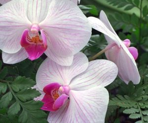 ORCHIDS - can I grow them in my home? 6