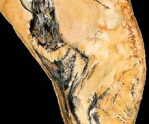 This image it is about The Chauvet Cave – The scientific research – Part 1