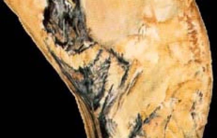 The Chauvet Cave - The scientific research - Part 1 2