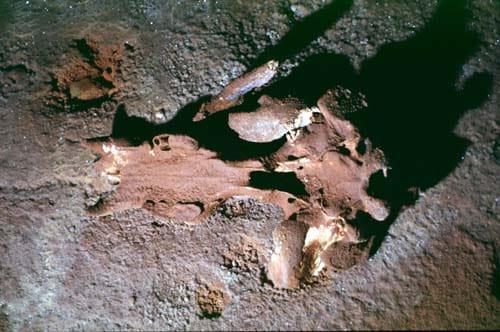 The Chauvet Cave - The scientific research - Part 1 1