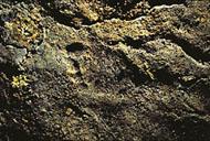 The Chauvet Cave - The scientific research - Part 1 5