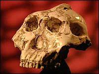 Where the bones are? 8