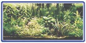 A Simple Freshwater Aquarium Set-Up 4