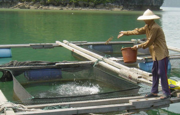 Issues in Aquaculture 1