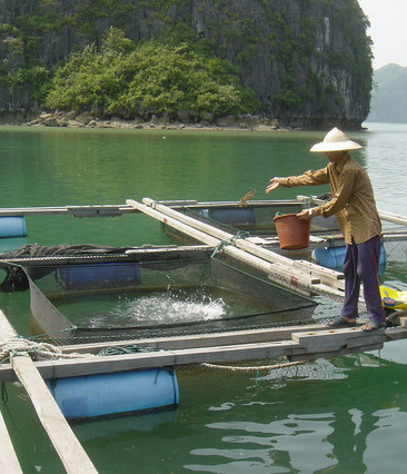 Issues in Aquaculture