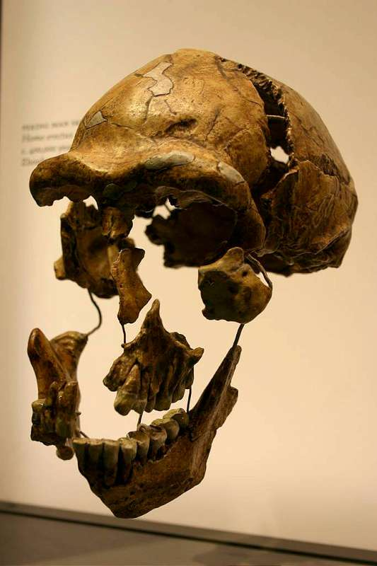 The Origin of Modern Humans: Multiregional and Replacement Theories 3