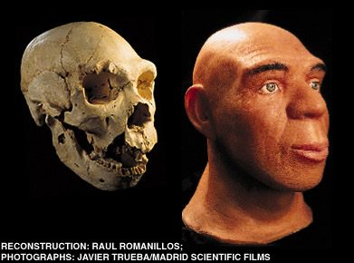 Atapuerca fossil facial reconstruction