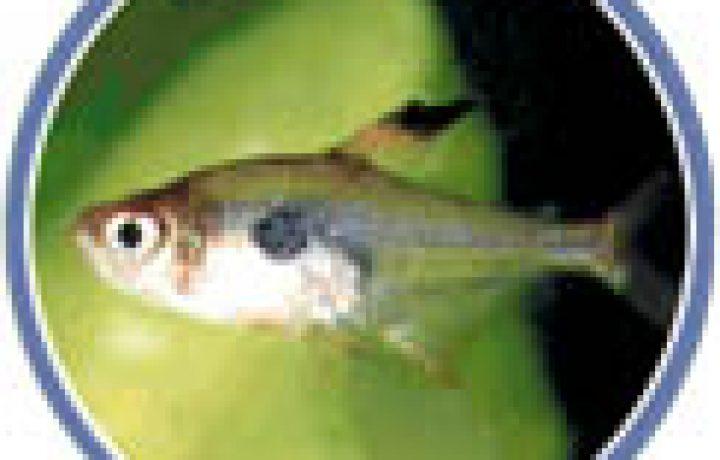 Home Aquarium - Maintaining Your Aquarium 2