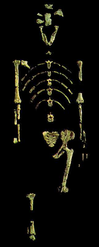 The Origin of Modern Humans: Multiregional and Replacement Theories 1