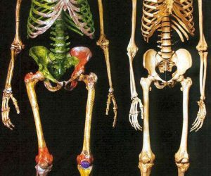 This image it is about The Origin of Modern Humans: Multiregional and Replacement Theories