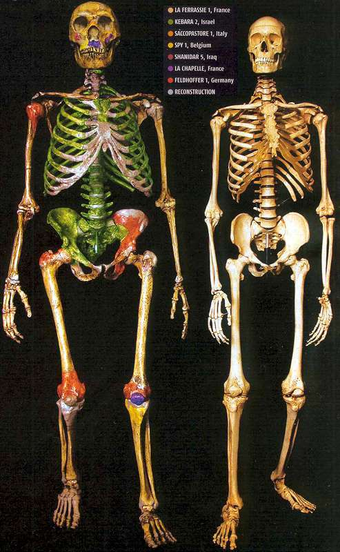 The Origin of Modern Humans: Multiregional and Replacement Theories 6