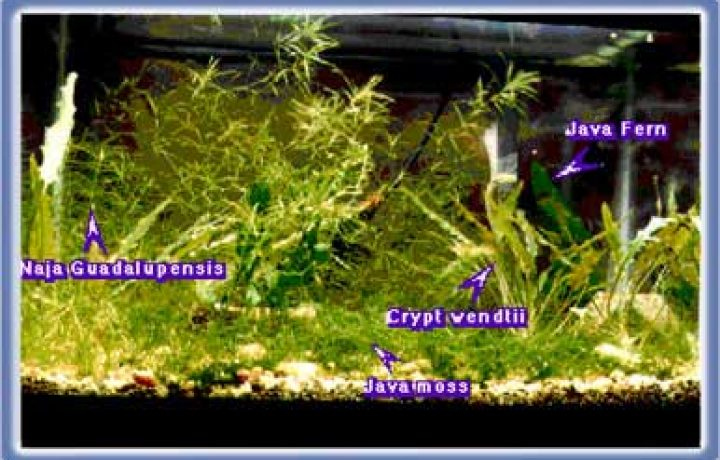 Hints on Aquarium Shopping 2
