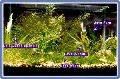 Hints on Aquarium Shopping 4
