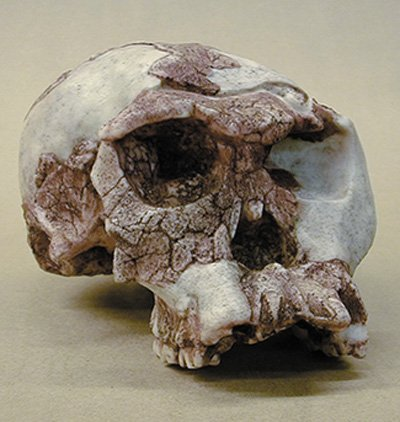 The Origin of Modern Humans: Multiregional and Replacement Theories 2