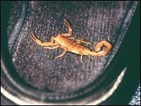 Surviving the scorpion sting 5
