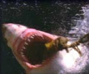 This image it is about Jaws was a picky eater