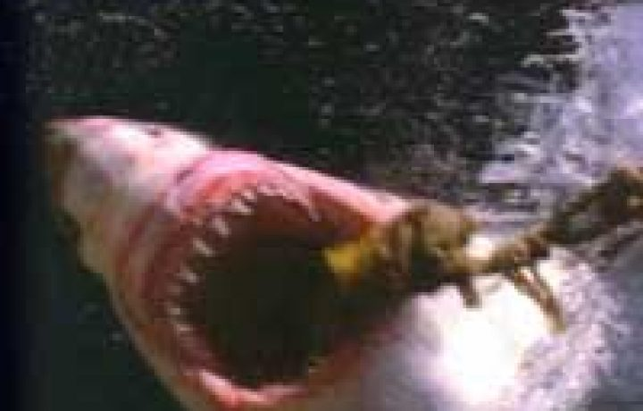 Jaws was a picky eater 2