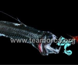 Imaginea thumbnail despre Bioluminescence: Livings lights, Earth's Own Aliens