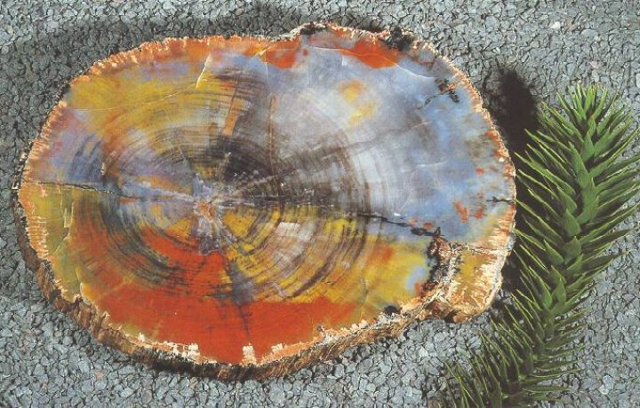 Petrified Wood - how the trees turned to stone 2