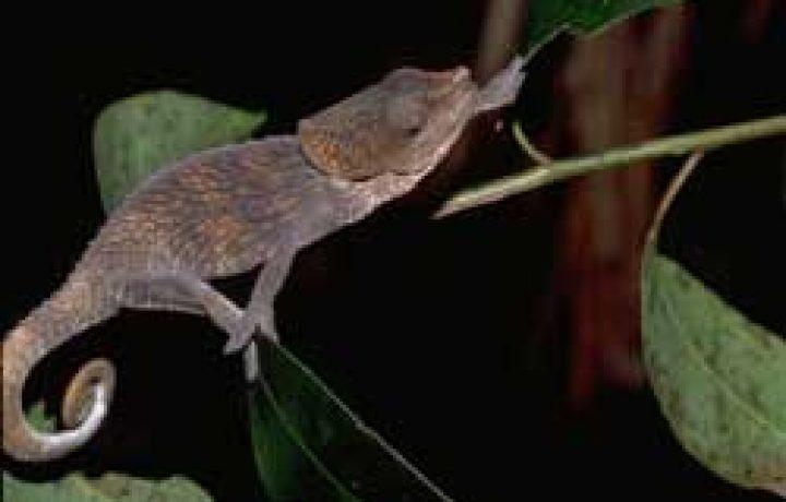 Social Chameleon 2