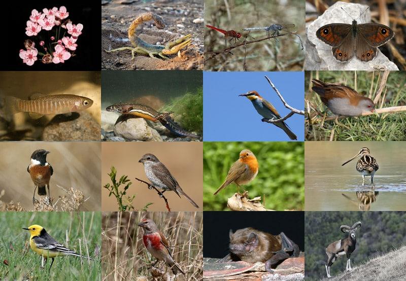 Biodiversity Database