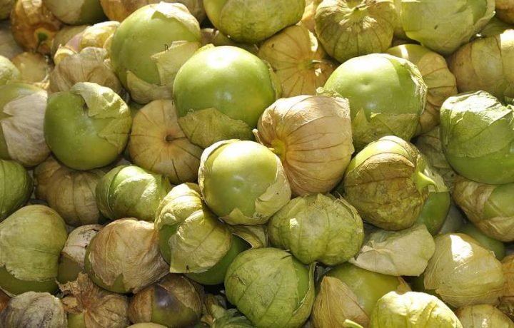 tomatillo recipes for salsa and mexican souce