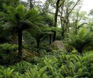 Fern Valley meadow