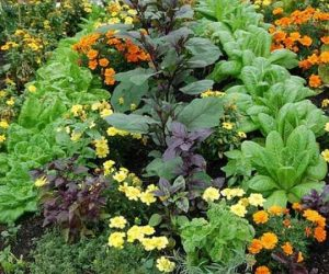 How to Start a Garden vegetables and flowers