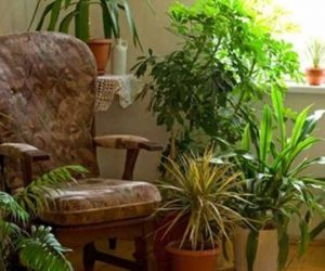 Imaginea thumbnail despre How much light do houseplants need?