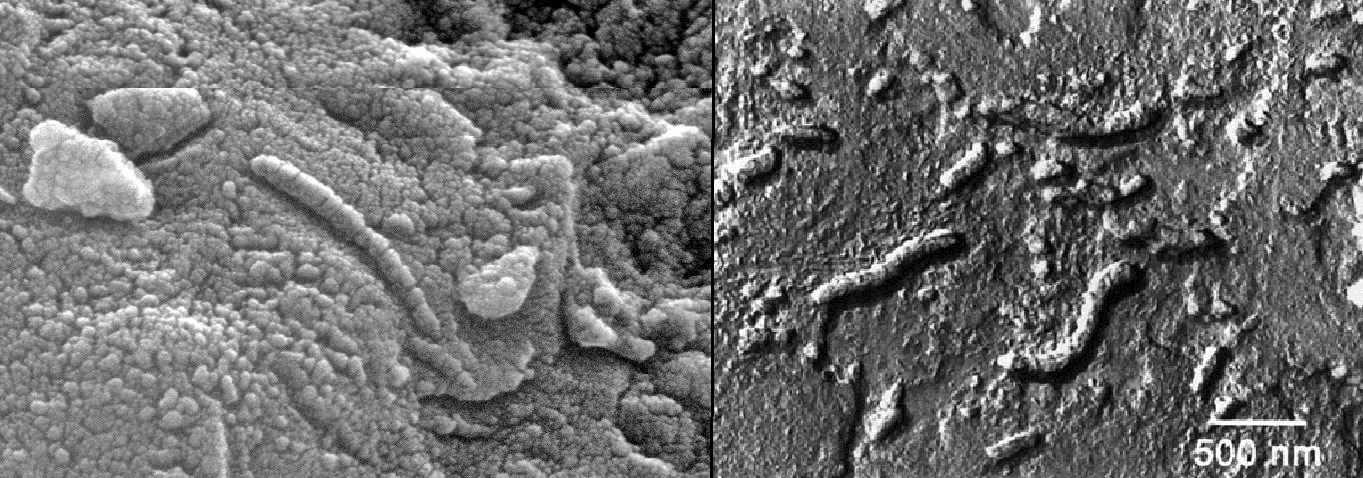 meteorite ALH84001