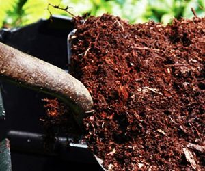Imaginea thumbnail despre Should You Compost Your Poop? Studies and best composting systems!