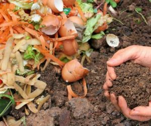 Imaginea thumbnail despre How Compost Turns Yard Waste Into Black Gold