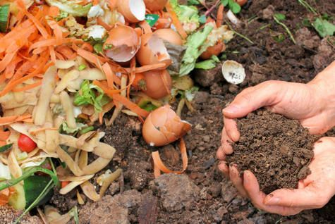 Compost scraps - What to do with your yard waste