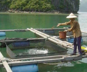 This image it is about Issues in Aquaculture