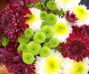 This image it is about Perennials: Chrysanthemums