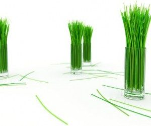 This image it is about World Dictionary of Grasses – Yoruba Grass Name