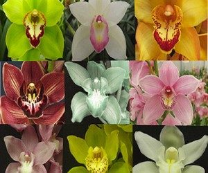 This image it is about ORCHIDS – can I grow them in my home?