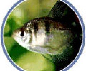 This image it is about Home Aquarium – Introducing Fish to Your Aquarium