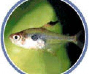 This image it is about Home Aquarium – Maintaining Your Aquarium