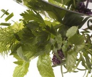 This image it is about Get rid of gout? Descover the best natural herbs for gout!