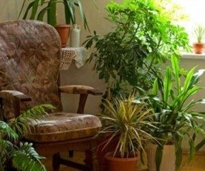 This image it is about How much light do houseplants need?