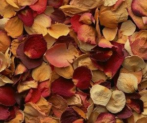 This image it is about Potpourri: Makes Scents To Me