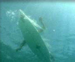 This image it is about The real threat of sharks